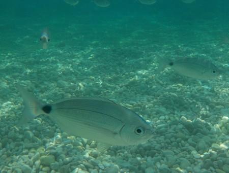 unterwasser-2